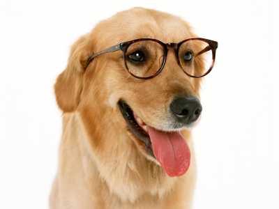 梦见大狗是什么意思 梦见狗是什么意思